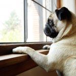 Cómo evitar que tu mascota sufra estrés